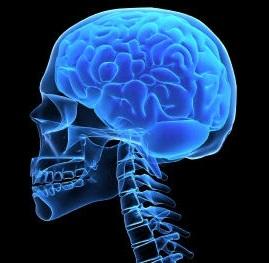 Skull Brain Xray